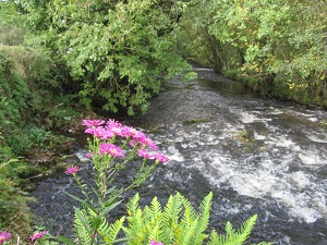 Flowers along a stream in Pembrokeshire, October, 2013