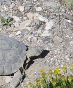Tortoise Castle in the Mojave Desert near Las Vegas, NV by DA Jones, April 2014